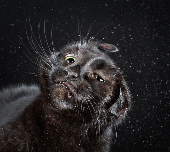 πορτραίτα γάτες