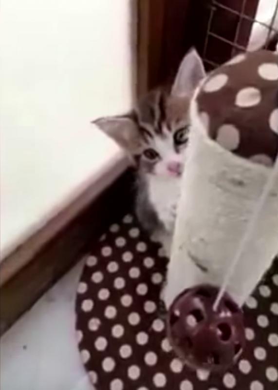 γατάκια αδέσποτα γατάκια Αδέσποτα