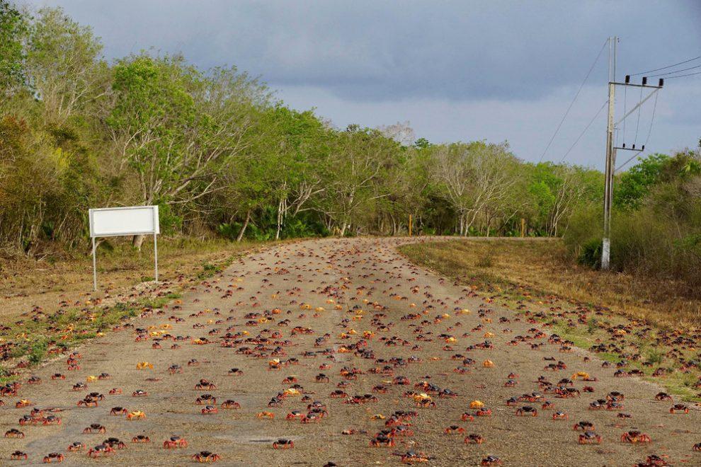 Κούβα καβούρια