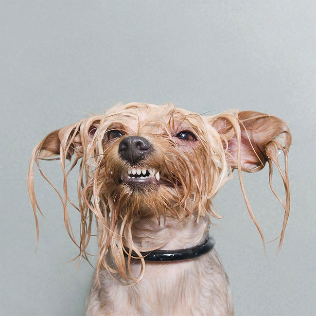 Σκύλος σκύλοι σκυλιά σκυλάκια μπάνιο