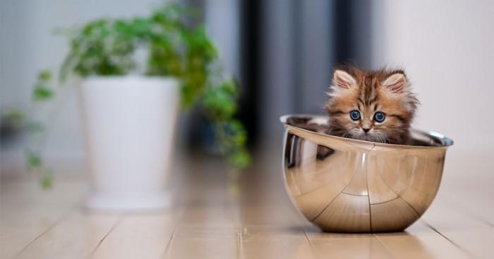 το πιο γλυκό γατάκι του κόσμου Γνωρίστε την Daisy γατάκι
