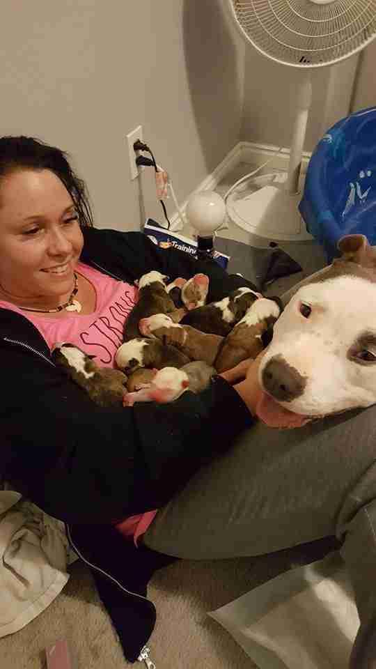 Σκύλος σκύλοι σκυλίτσα αδέσποτο Αδέσποτη σκυλίτσα τοποθετεί τα κουτάβια της στην αγκαλιά της γυναίκας που της έσωσε τη ζωή αδέσποτη Αδέσποτα