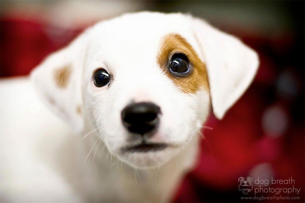 Σκύλος σκύλοι Πορτραίτα σκύλων από την Kaylee Greer πορτραίτα σκύλων