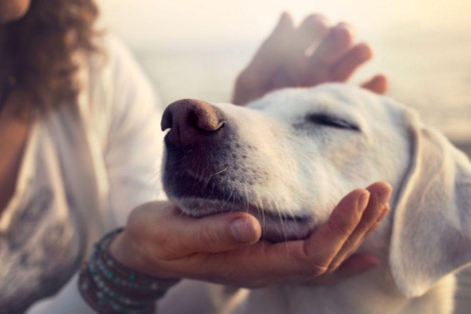 Σκύλος Ν' αγαπάς σαν σκύλος – H μόνη επικίνδυνη ράτσα είναι η ανθρώπινη