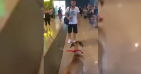 Ο σκύλος είχε να δει το αφεντικό του, πάνω από 3 Χρόνια. Η στιγμή της επανασύνδεσης, συγκλόνισε όλο το αεροδρόμιο!