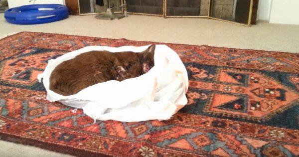 Έβαλε την νεκρή γάτα του μέσα σε μια σακούλα και την άφησε στο σαλόνι. Ο λόγος; Θα σας κάνει να δακρύσετε!