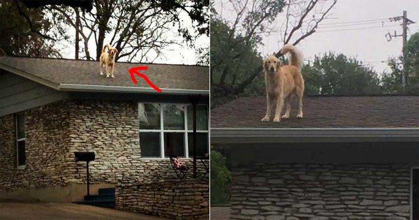 Ο σκύλος τους ανέβαινε συνέχεια στην σκεπή και τρόμαζε τους περαστικούς. Τότε οι ιδιοκτήτες του σκέφτηκαν ΚΑΤΙ εκπληκτικό!