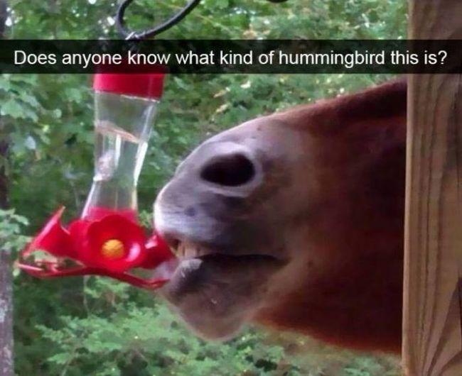 φωτογραφίες ζώων ζώα