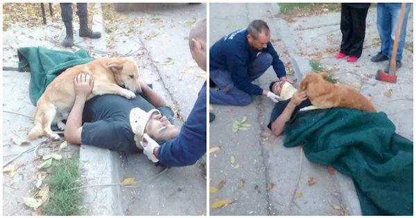 Πιστός σκύλος δεν σταματάει να αγκαλιάζει το αφεντικό του που έπεσε από τη σκάλα ούτε όταν έρχονται οι πρώτες βοήθειες!
