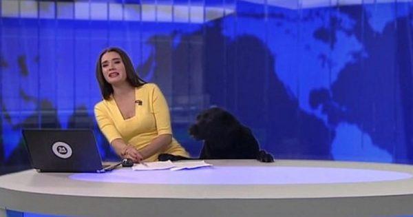 Σκύλος εισβάλει στο στούντιο κατά τη διάρκεια δελτίου ειδήσεων