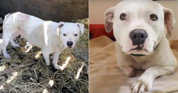 Συγκλονιστικό! Δεμένη και εγκαταλελειμμένη σκυλίτσα μάσησε το πόδι της μέχρι να το κόψει ώστε να ελευθερωθεί από τις αλυσίδες της