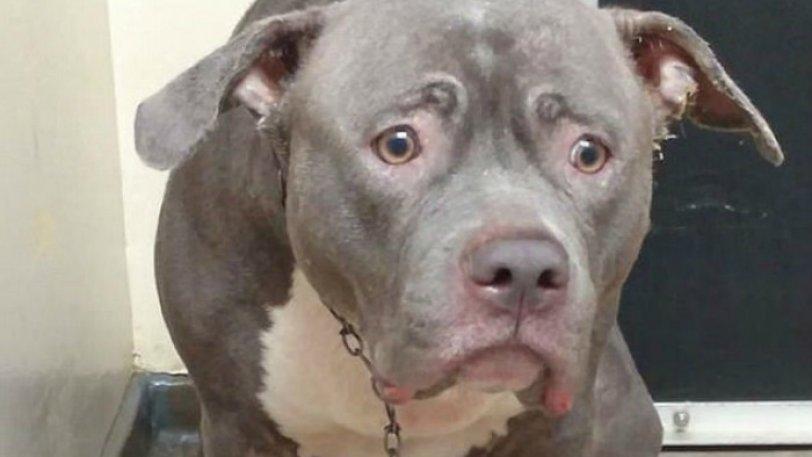 Σκύλος H στιγμή που σκύλος συνειδητοποιεί ότι οι ιδιοκτήτες του τον παράτησαν για πάντα