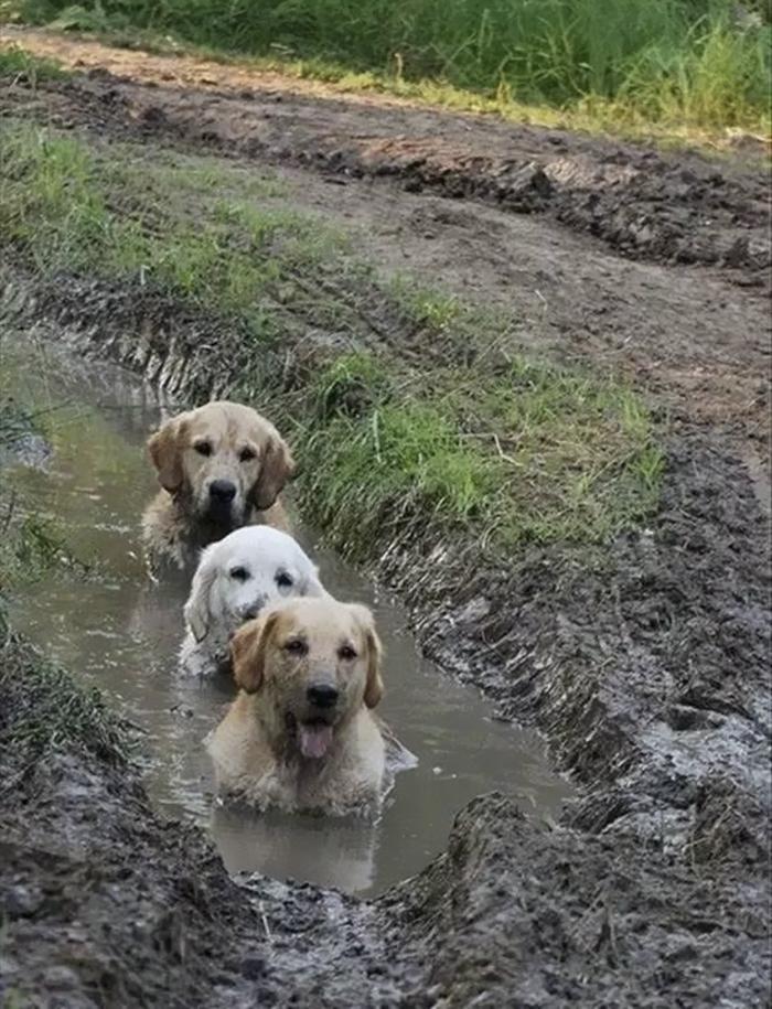 Σκύλος λάσπη 30 φωτογραφίες που εξηγούν τους λόγους που δεν πρέπει να αφήσετε τον σκύλο σας να παίξει στη λάσπη