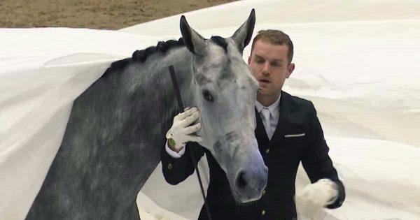 Απλώνει ένα τεράστιο λευκό σεντόνι πάνω από το άλογό του. Αυτό που συμβαίνει στη συνέχεια; ΕΚΠΛΗΚΤΙΚΟ!