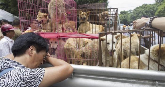 Σκύλος σκύλοι κρέας σκύλου Η πώληση κρέατος σκύλου επιτέλους απαγορεύτηκε από το φεστιβάλ του Yulin στην Κίνα
