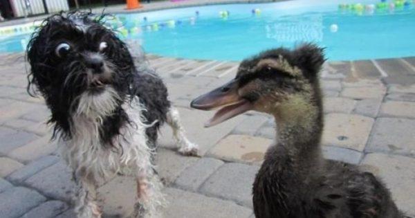 Σκύλοι που φοβούνται τα πιο αστεία πράγματα