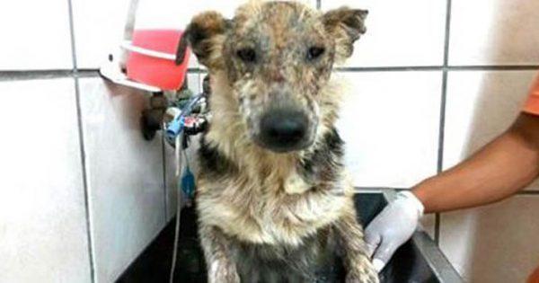 Οι άκαρδοι ιδιοκτήτες του, δεν τον είχαν κάνει ποτέ μπάνιο. Η αντίδρασή του όταν νιώθει καθαρός για 1η φορά; Συγκλονιστική!