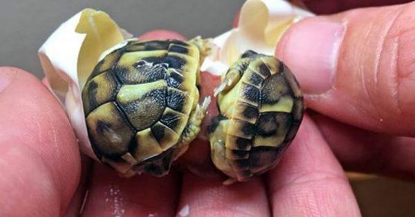Είδε ότι το νεογέννητο χελωνάκι δυσκολευόταν να βγει από το αυγό του. Μόλις κατάλαβε τον λόγο, έμεινε άφωνος!