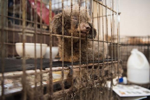 Σκύλος Σκυλίτσα που πέρασε όλη της την ζωή κλειδωμένη σε ένα υπόγειο δεν μπορεί να συγκρατήσει τον ενθουσιασμό της που ελευθερώθηκε σκυλίτσα