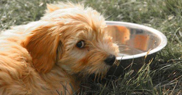 Γνωρίζεις γιατί ο σκύλος σου παίρνει τροφή από το μπολ του και την τρώει κάπου αλλού;