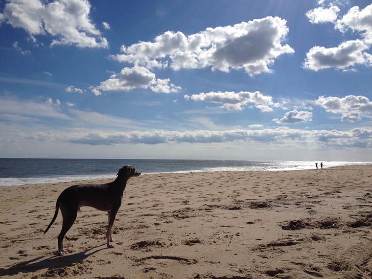Σκύλος κακοποίηση σκύλων θάλασσα