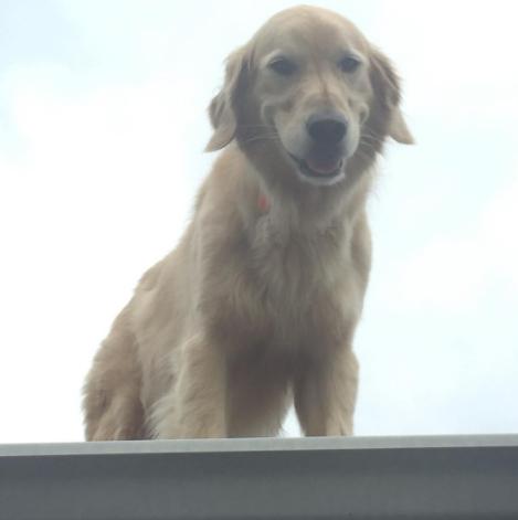 Σκύλος σκύλοι Ο σκύλος τους ανέβαινε συνέχεια στην σκεπή και τρόμαζε τους περαστικούς. Τότε οι ιδιοκτήτες του σκέφτηκαν ΚΑΤΙ εκπληκτικό!
