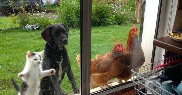 Zώα που θέλουν οπωσδήποτε να μπουν… μέσα!