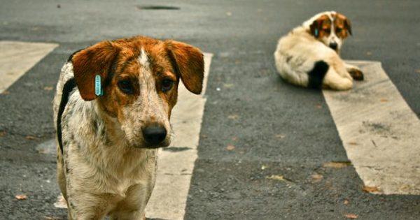 Μπορώ να ταΐζω αδέσποτα ζώα – Τι λέει η ελληνική νομοθεσία