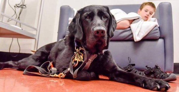 Ο σκύλος φύλακας-άγγελος 7χρονου που πάσχει από διαβήτη (βίντεο)