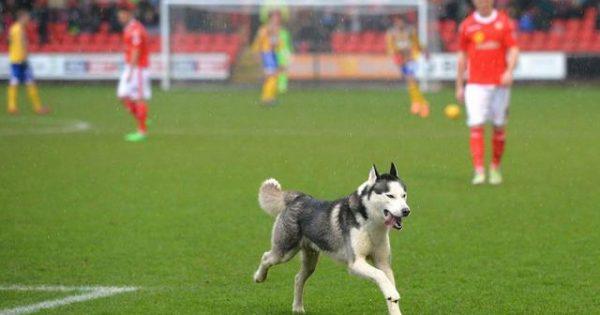Αστείο βίντεο: Ζώα εναντίον αθλητικών αγώνων!
