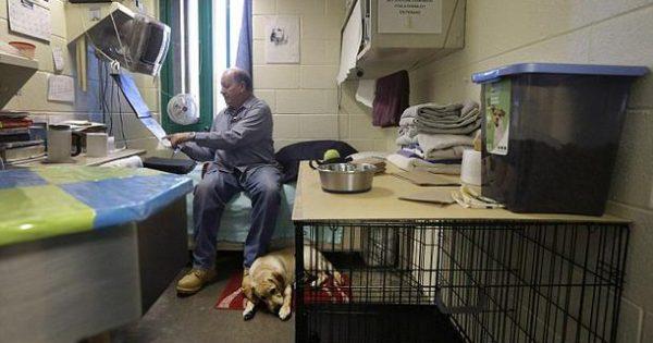 Έβαλαν έναν σκύλο στο κελί ενός φυλακισμένου εγκληματία και άρχισαν να βιντεοσκοπούν. Δείτε τι συνέβη…  (βίντεο)