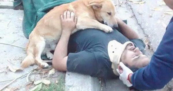 Ο σκύλος που έκανε το διαδίκτυο να «λυγίσει»