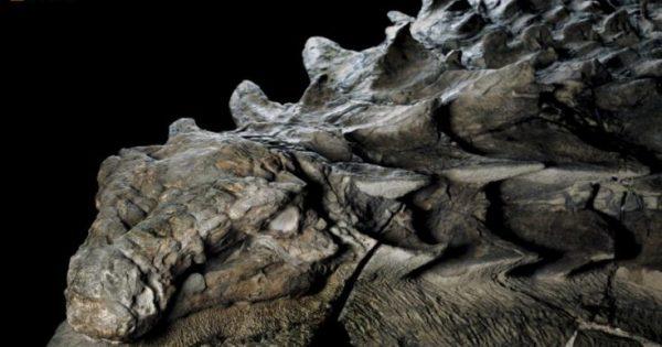 «Ζωντανός» δεινόσαυρος ανακαλύφθηκε από παλαιολόγους στον Καναδά