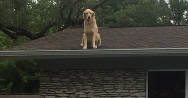 Ο σκύλος που σκαρφαλώνει στη στέγη και η πινακίδα που έβαλαν οι ιδιοκτήτες του