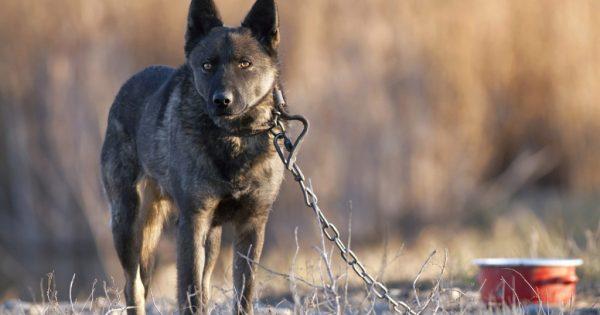 Πώς πρέπει να αντιδράσετε αν γίνετε μάρτυρες κακοποίησης ή θανάτωσης ζώου