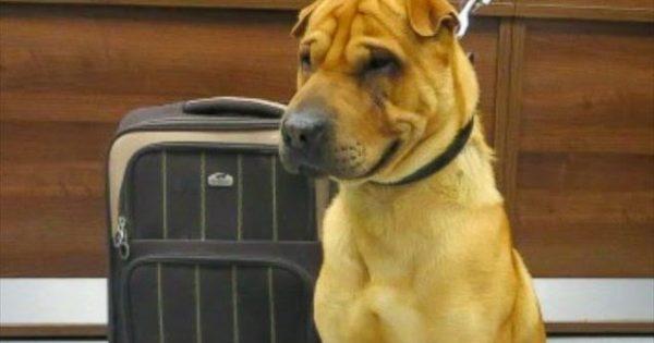 Συγκινεί ο σκύλος που βρέθηκε εγκαταλελειμμένος με τα υπάρχοντά του