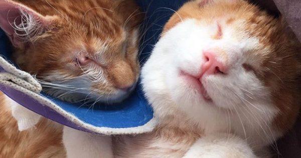 Δείτε ποσό αγαπημένα είναι αυτά τα δίδυμα τυφλά γατάκια