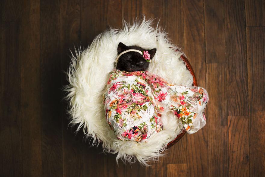 Επαγγελματίας φωτογράφος φωτογραφίζει το νέο γατάκι της κόρης της