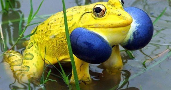 Γνωστά ζώα με απρόσμενα χρώματα!