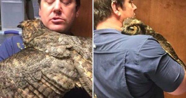Κουκουβάγια δεν μπορεί να σταματήσει να αγκαλιάζει τον άντρα που την έσωσε