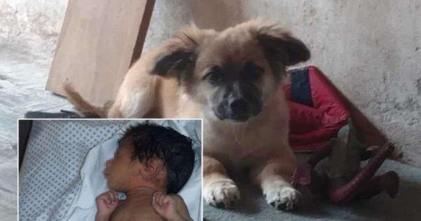 Κουτάβι σώζει νεογέννητο μωρό που η μαμά του το εγκατέλειψε σε μια πλαστική σακούλα