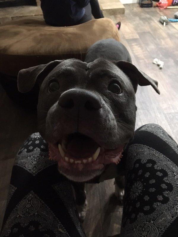καταφύγιο εγκατάλειψη σκύλων