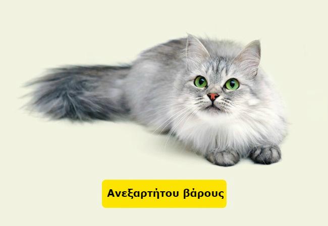 ηλικία σκύλου ηλικία γάτας