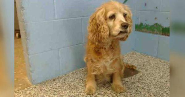 Θα κλάψετε: 15χρονη σκυλίτσα κλαίει, καθώς ο ιδιοκτήτης της την παρατάει και απομακρύνεται με το νέο του κουτάβι