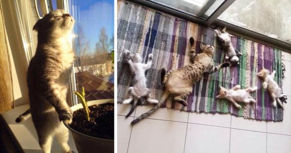 20 ξέγνοιαστες γάτες που απολαμβάνουν τον ήλιο σαν να μην υπάρχει αύριο!