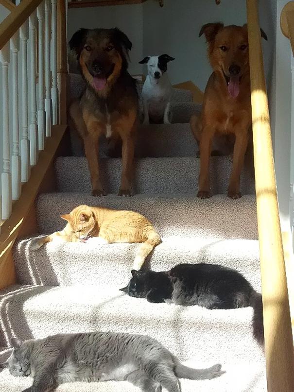 γάτες 20 ξέγνοιαστες γάτες που απολαμβάνουν τον ήλιο σαν να μην υπάρχει αύριο!