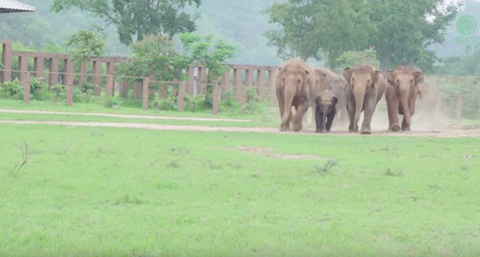 ελέφαντες ελεφαντάκι