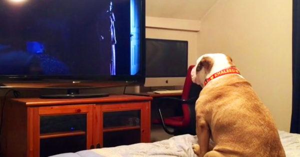 Βιντεοσκοπεί τον σκύλο της την ώρα που βλέπει θρίλερ. Προσέξτε τώρα ΠΩΣ αντιδράει στις τρομακτικές σκηνές!