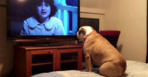 Μπουλντόγκ φρικάρει σε ταινία τρόμου, στο πιο «awww cute» βίντεο που θα δεις σήμερα