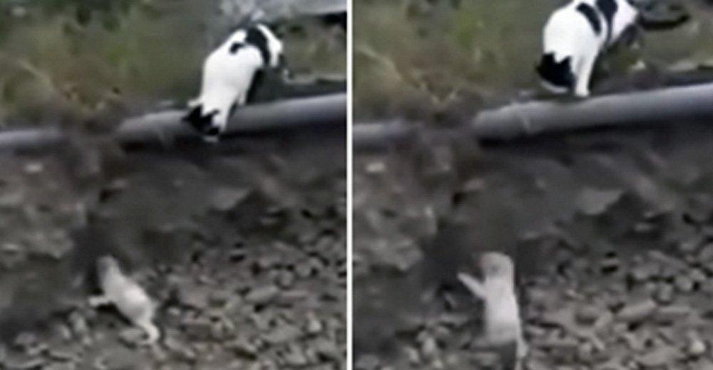 γάτα σώζει σκυλάκι